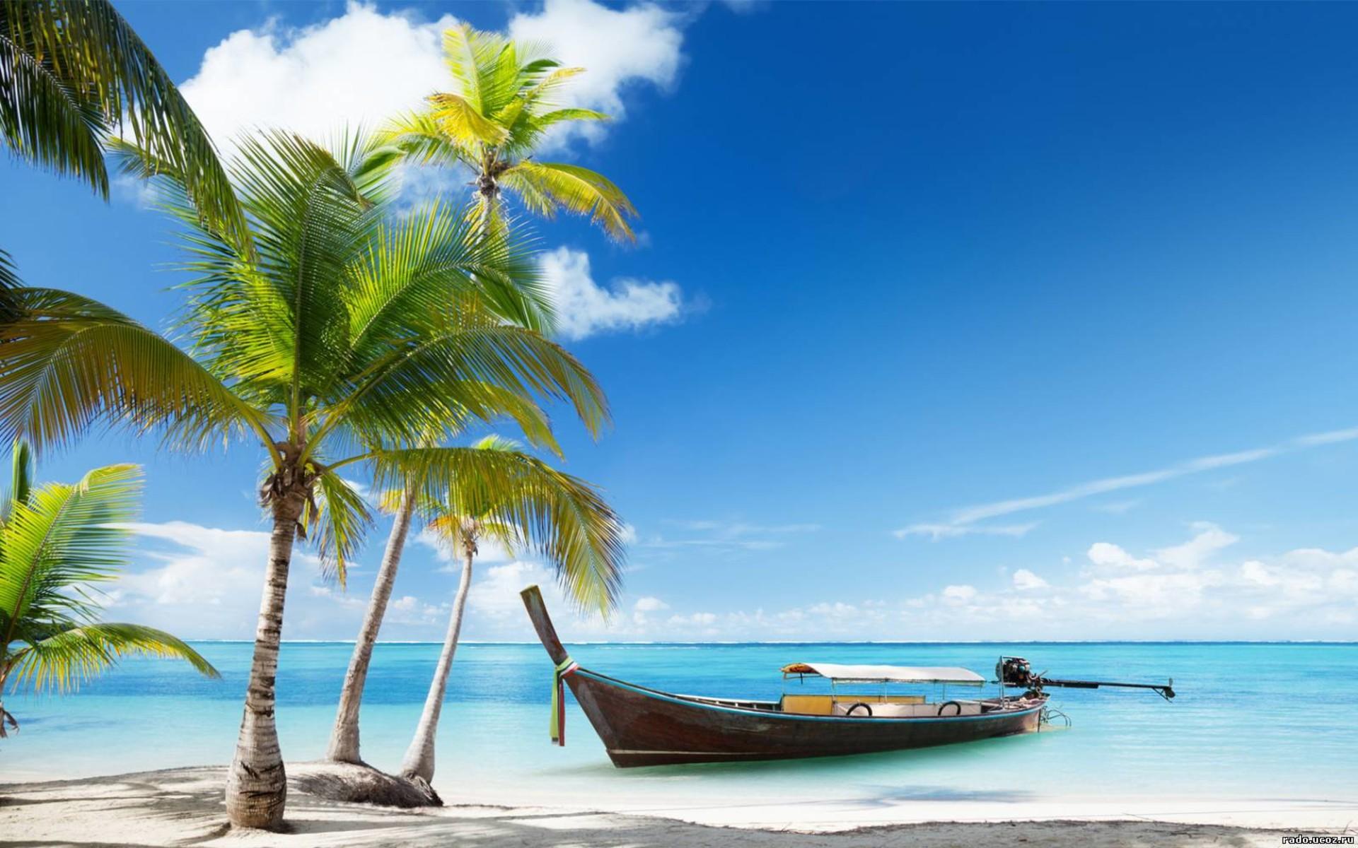 фото море и пальмы.jpg