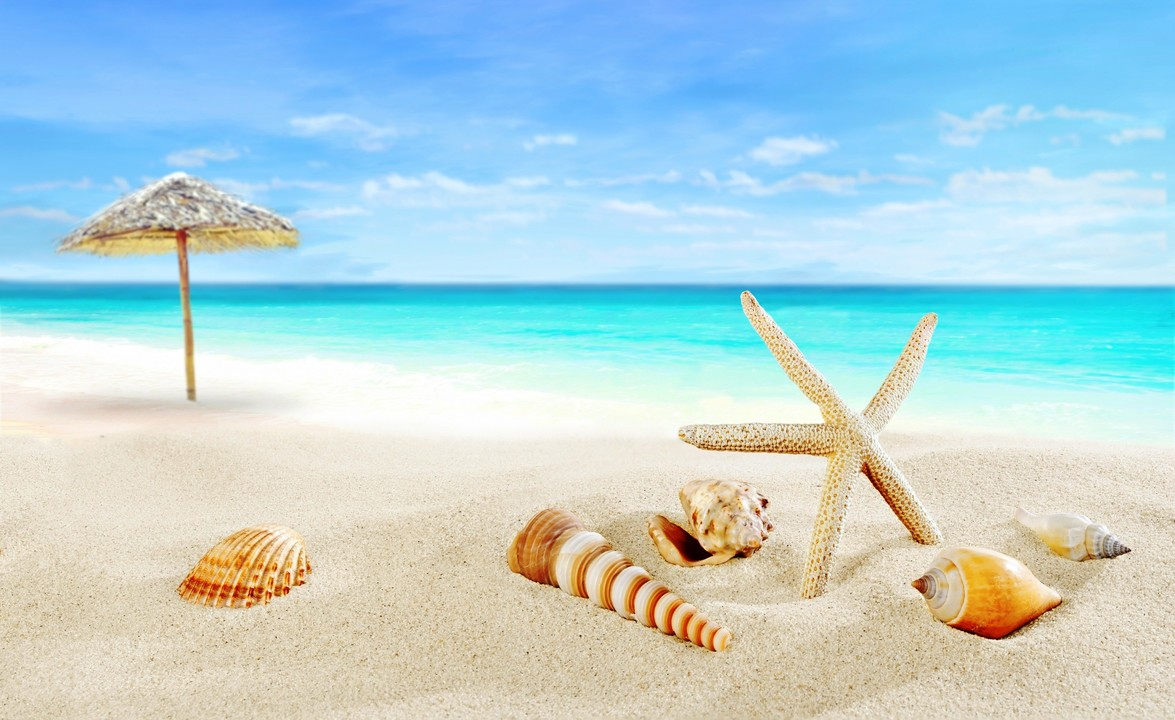 seashells-starfish-summer-7362.jpg