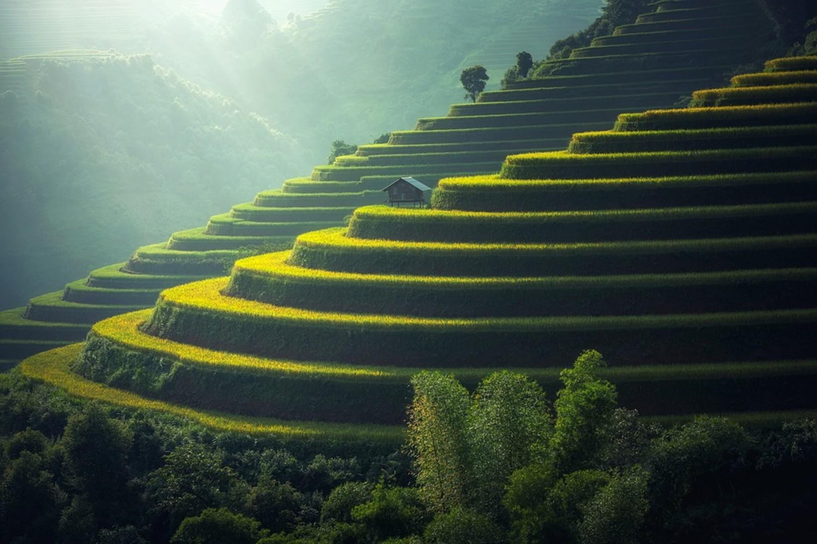 rice-plantation-1822444_960_720.jpg