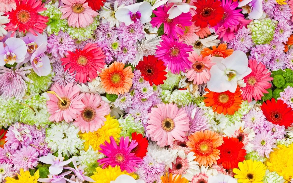 Chrysanthemums-orchids-gerbera-colorful-flowers_2560x1600_wallpaper (1).jpg