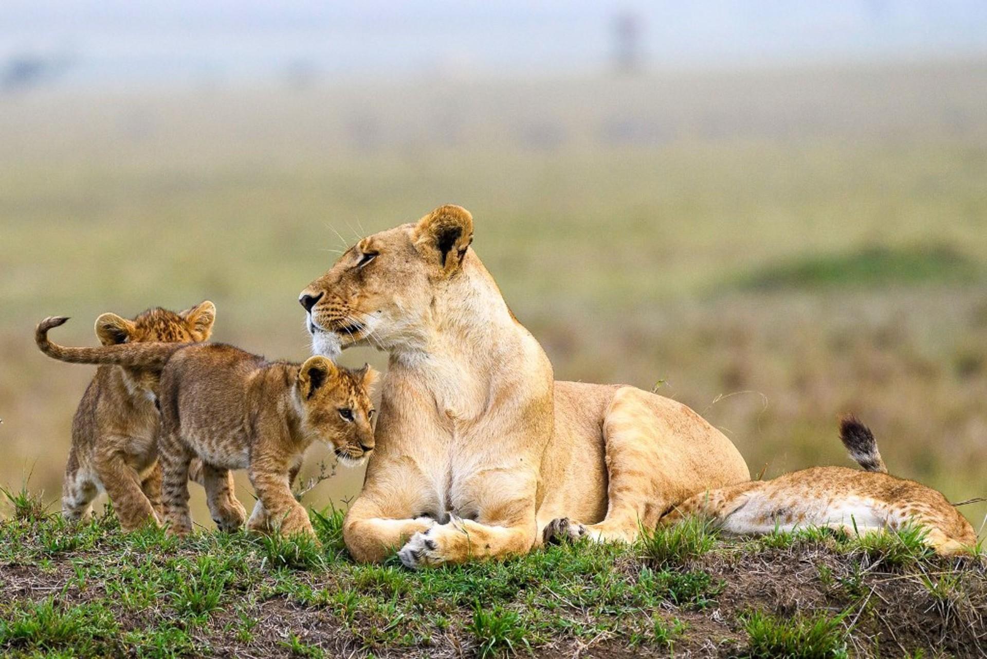 masai-mara-game-reserve-kenya-safari-tours-from-nairobi-jt-safaris-julius-safaris.jpg