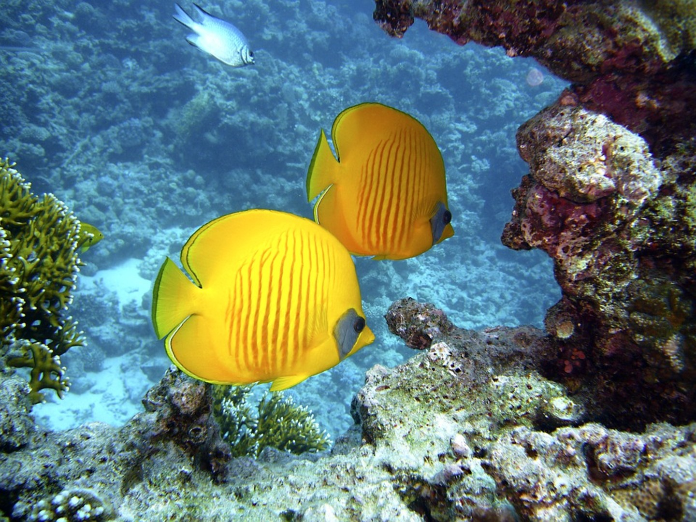 diving-1656380_960_720.jpg