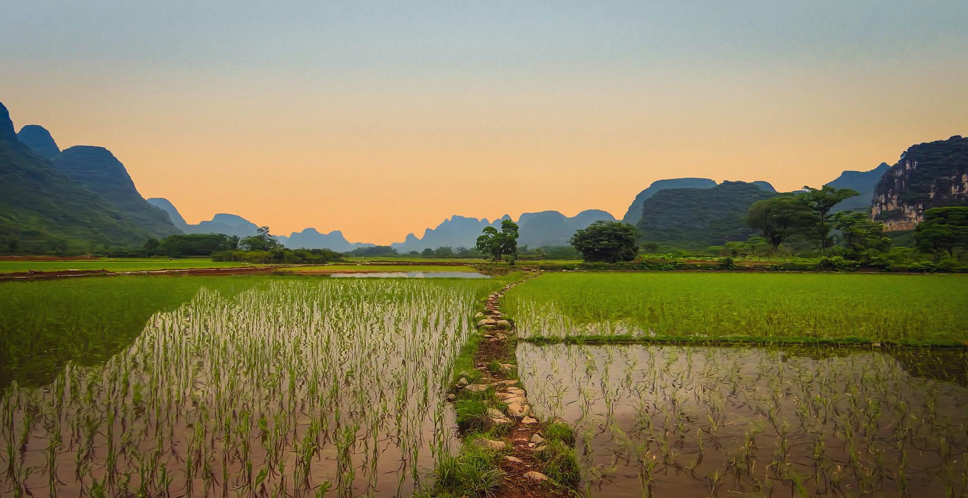 Vietnam_Rice_Fields_(196497531).jpeg